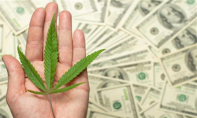 licenced-greenhouse-cannabis-farm-for-sale